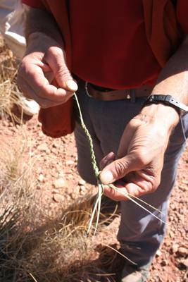Ahmed's Chamaerops cord