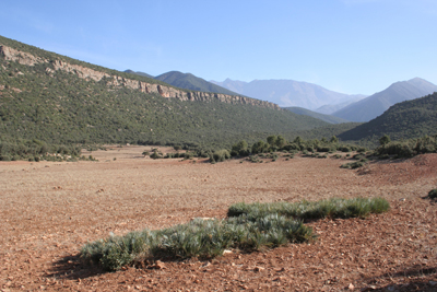 Looking toward Djebel Toubkal, the highest peak in Morocco, with great clonal sheets of Chamaerops humilis var. cerifera