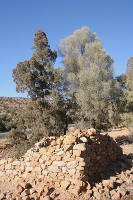 Olea europaea subsp. maroccana and Tetraclinis articulata in the Ida Outanane