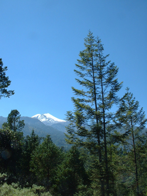 Pico de Orizaba and Abies religiosa from 3000m alt