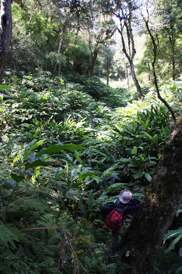 An all too familiar site once you get into the forest. Cardamom growers are destroying the understory, across vast areas, for an easy cash crop. Everywhere we went (up to a certain altitude) this was happening, even in nature reserves.