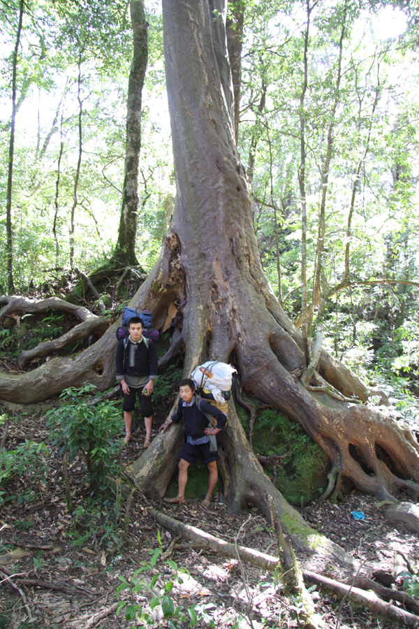 Our Black Hmong ethnic minority porters posing in front of a Huodendron. A tree that often made quite magnificent specimens at mid elevation. The bark is very thin, with a satin finish and exfoliates every year in patches.