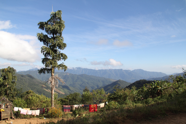 Caryota maxima in the village of Madoyah, en route to Khayang. The wall of mountains in the distance marks the border between India and Burma.