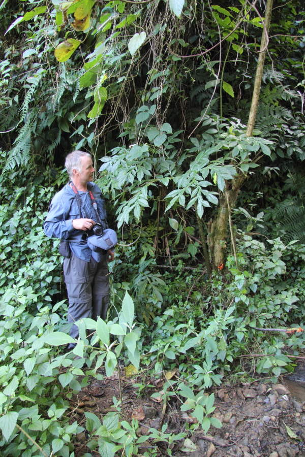 Amorphophallus having stern words with Paul, en route to Khayang.