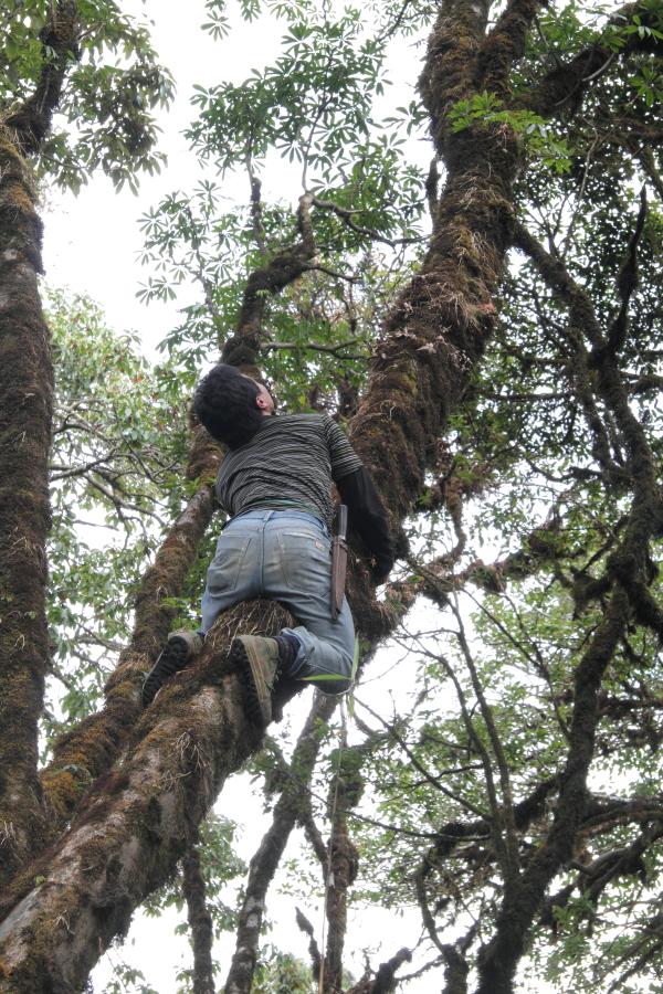 A natural arborist.